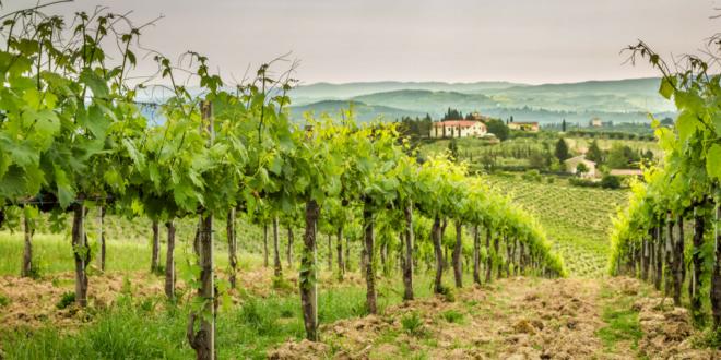 US wine imports