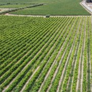 Case Study: Outsourced U.S. Operations for an Award-winning Vineyard | Seaman's Beverage and Logistics